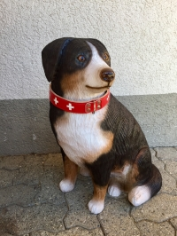 Appenzeller Hund